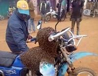 Méhek segítettek visszaszerezni egy lopott motorkerékpárt