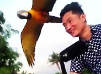 Papagáj versenyzett a mopedessel